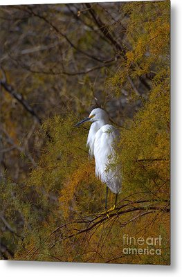 Egret Surrounded By Golden Leaves Metal Print by Ruth Jolly