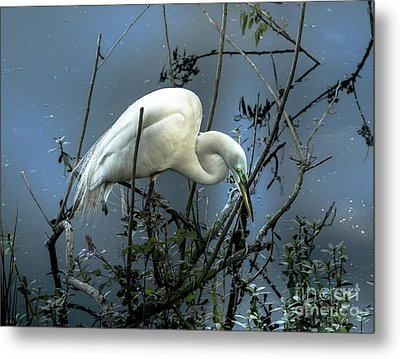 Metal Print featuring the photograph Egret Under Marina Lights by Robert Frederick