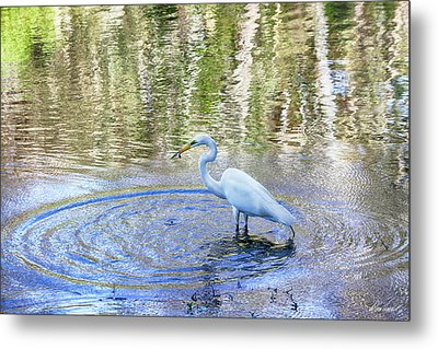 Egret With A Fish Metal Print