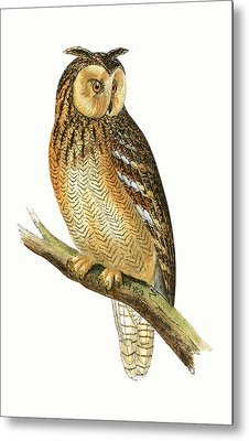Egyptian Eared Owl Metal Print by English School