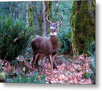 Eight Point Buck Metal Print