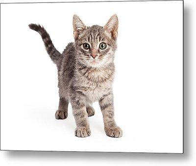 Eight Week Old Playful Tabby Kitten Metal Print by Susan Schmitz