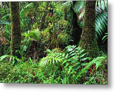 El Yunque Lush Vegetation Metal Print by Thomas R Fletcher