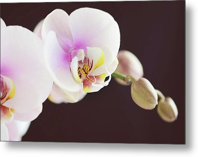 Elegant Beauty Metal Print by Dhmig Photography