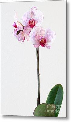 Elegant Orchid Metal Print by Anita Oakley
