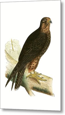 Eleonora Falcon Metal Print by English School