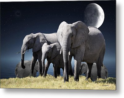 Elephant Bath Time Metal Print by Ericamaxine Price