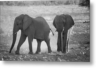 Elephant Buddies - Black And White Metal Print by Nancy D Hall