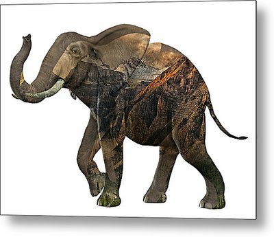 Elephant Collection Metal Print by Marvin Blaine