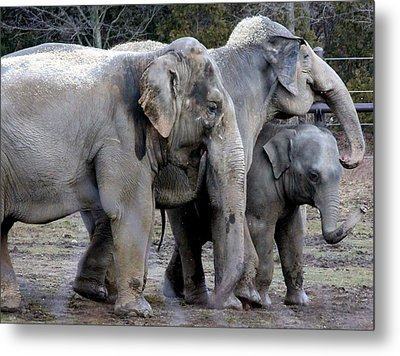 Elephant Family Metal Print