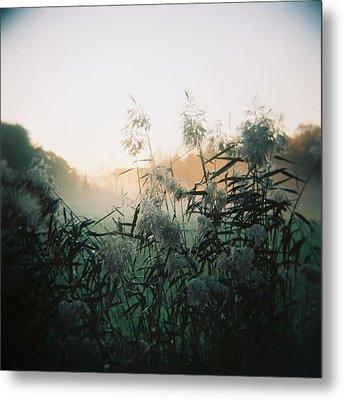 Elephant Grass At Dawn Metal Print