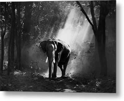 Elephant In The Heat Of The Sun Black And White Metal Print