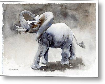 Elephant Light Study  Metal Print by Amy Kirkpatrick