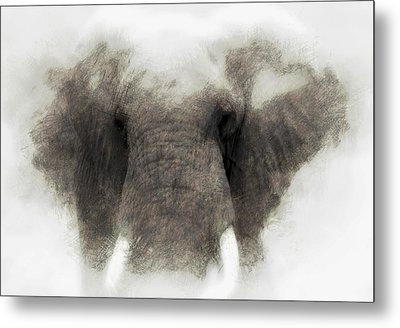 Elephant Portrait Metal Print