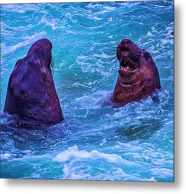 Elephant Seals Fighting In Ocean Surf Metal Print by Garry Gay