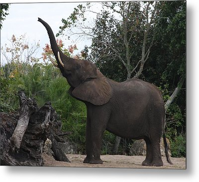Metal Print featuring the photograph Elephant Time by Vadim Levin