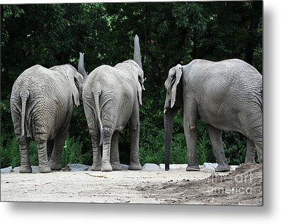 Elephant Trio Metal Print by Karol Livote