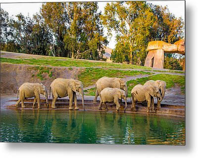 Metal Print featuring the photograph Elephants Are Family by April Reppucci