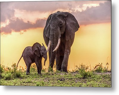 Elephants At Sunset Metal Print by Janis Knight