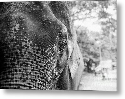 Metal Print featuring the photograph Elephant's Eye by Dean Harte