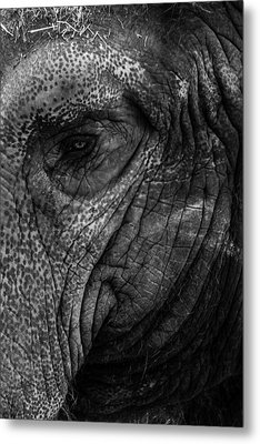 Elephants Eye Metal Print