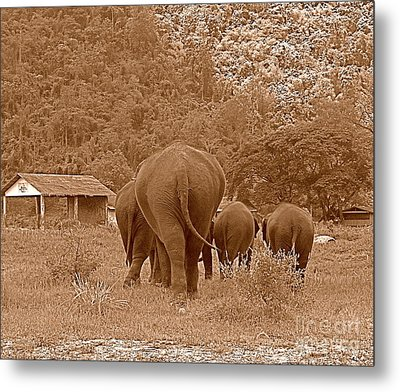 Metal Print featuring the photograph Elephants II by Louise Fahy