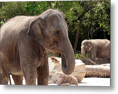 Elephants Metal Print by Jeannie Burleson