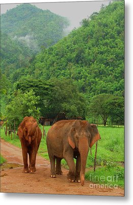 Metal Print featuring the photograph Elephants by Louise Fahy
