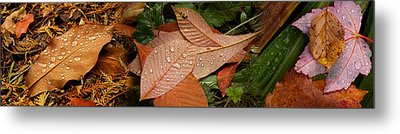 Elevated View Of Raindrops On Leaves Metal Print