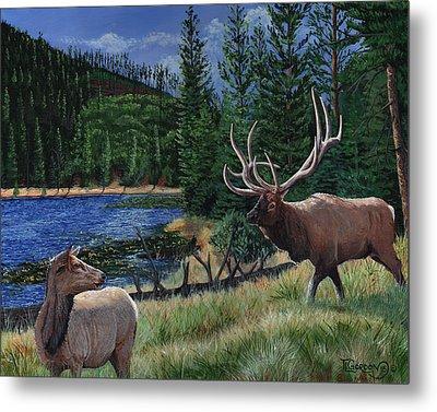 Elk At Beaver Lake  Yellowstone Metal Print