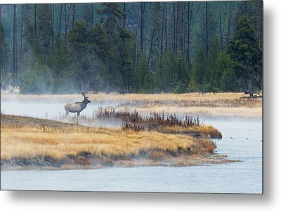 Elk Crossing Metal Print