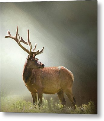 Metal Print featuring the photograph Elk In Suns Rays by David and Carol Kelly