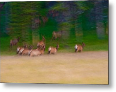 Elk On The Run Metal Print