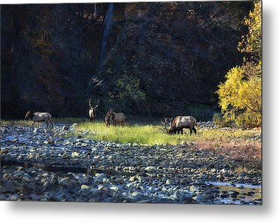 Metal Print featuring the photograph Elk River Crossing At Sunrise by Michael Dougherty