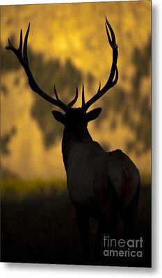 Elk Silhouette Metal Print by Wildlife Fine Art