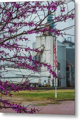 Ellsworth Blooms Metal Print by Darren White