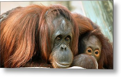 Embrace Metal Print by Donna Proctor