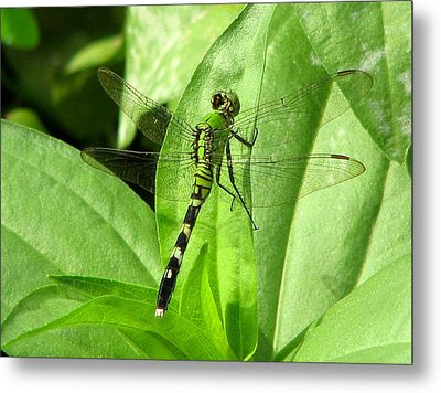 Metal Print featuring the photograph Emerald Dragonfly by David Dunham