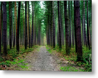 Emerald Forest Metal Print by Svetlana Sewell