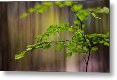 Metal Print featuring the photograph Emerald by Tim Nichols