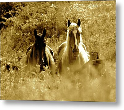 Emerging From The Farm Metal Print