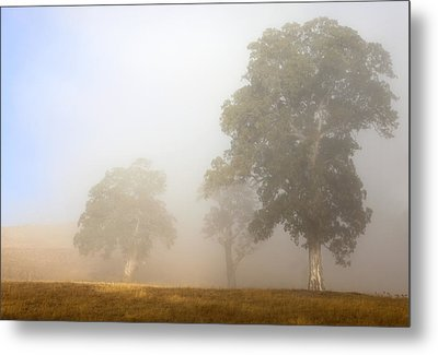 Emerging From The Fog Metal Print by Mike  Dawson