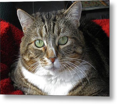 Emily Metal Print by Tammy Sutherland