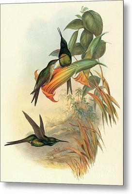 Empress Hummingbird Metal Print by John Gould