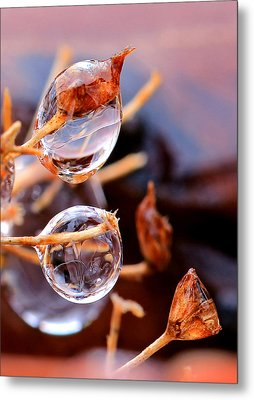 Encapsulated By Ice Metal Print by Christopher McKenzie
