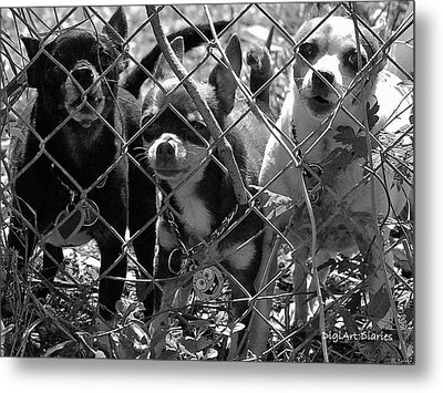 Encarcelados Chihuahuas Metal Print by DigiArt Diaries by Vicky B Fuller