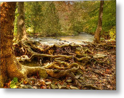 Enchanted Forest Metal Print by Ann Bridges