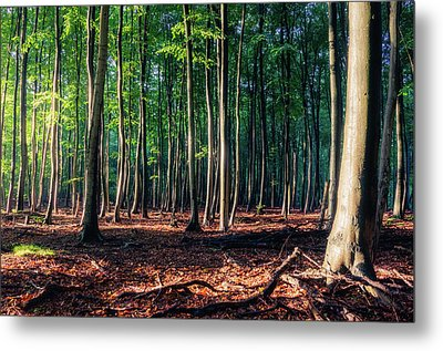 Metal Print featuring the photograph Enchanted Forest by Dmytro Korol
