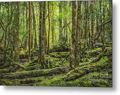 Enchanted Forest Metal Print by Evelina Kremsdorf