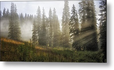 Enchanted Forest Of Kebler Pass  Metal Print by Thomas Schoeller